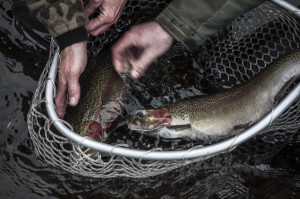bitterroot river fly fishing guides